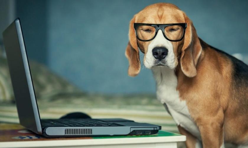 dog-blog_1024x1024